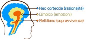 emozioni-tre-cervelli
